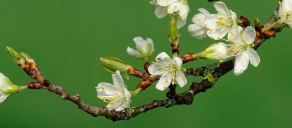 Gemoterapia - secretul unei detoxifieri reușite